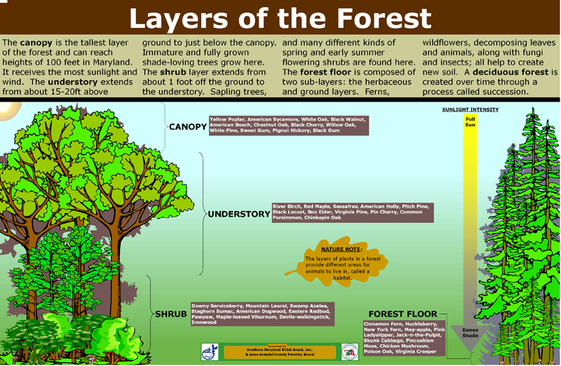 Temperate deciduous forest plants and trees